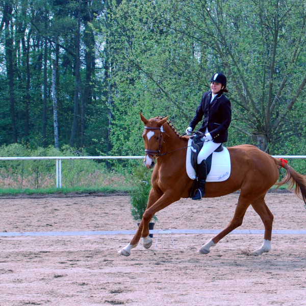 Jezdecký výcvik