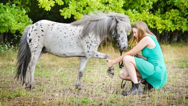 Ponyškolka